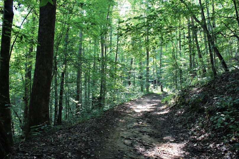 040 one of the many well groomed woods trails