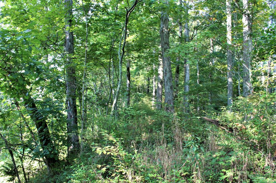 008 wooded north boundary ridge