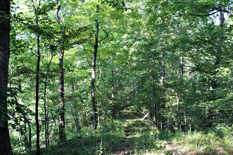 017 wooded ridge along the north boundary, notice the fencing