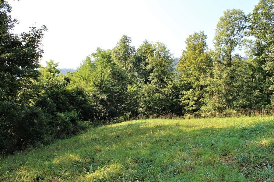 015 open field area near the ridge on the north part of the property