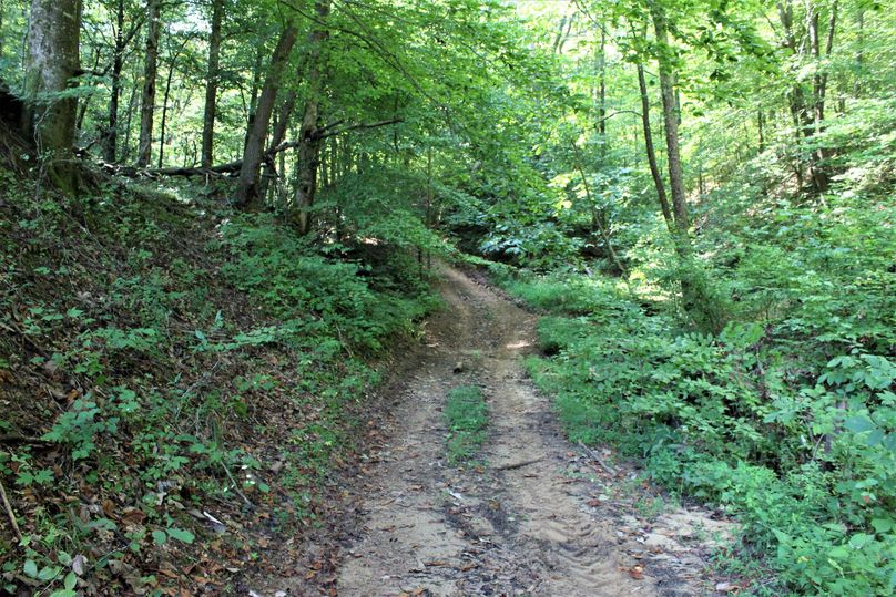 022 trail network leading up the valley behind the barn
