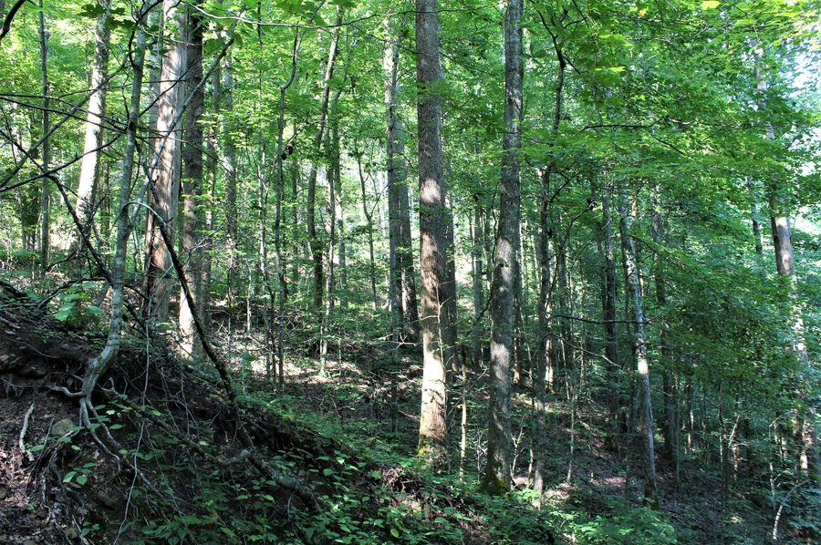 030 big woods north facing slope