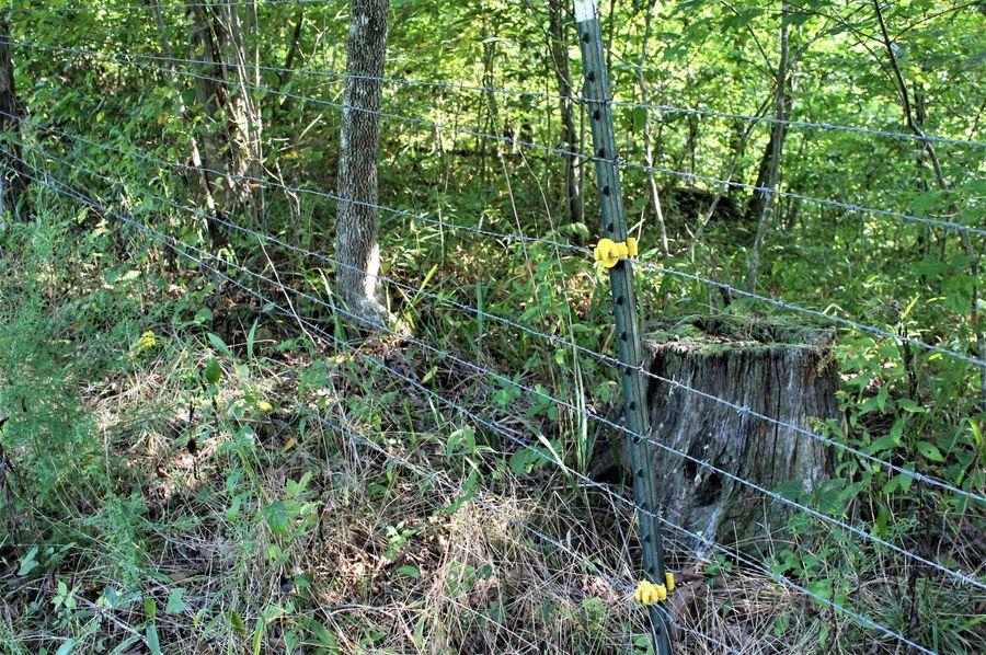 035 the fenced boundary along the far east boundary